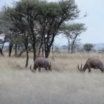 serengeti10